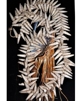 Conchas de puercoespín de África occidental
