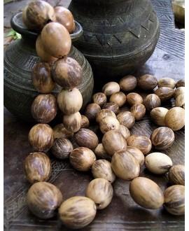 Cuenta de Semillas de palma natural de pona (Iriartea deltoidea) 22mm, precio por 5 unidades