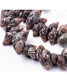 Cuentas de conchas espiral natural  5~10x12~17x6~10mm paso 1mm, precio por ristra