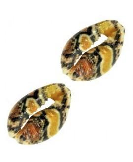 Conchas cauri multicolor 16-20x11-12mm aprox, precio por unidad