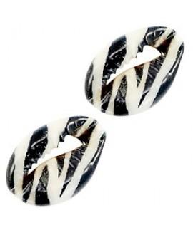 Conchas cauri negro/blanco cebra 16-20x11-12mm aprox, precio por unidad