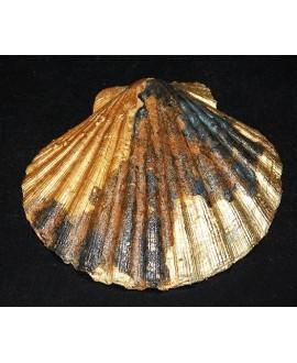 Colgante concha marina 110x120mm, patina artesanal